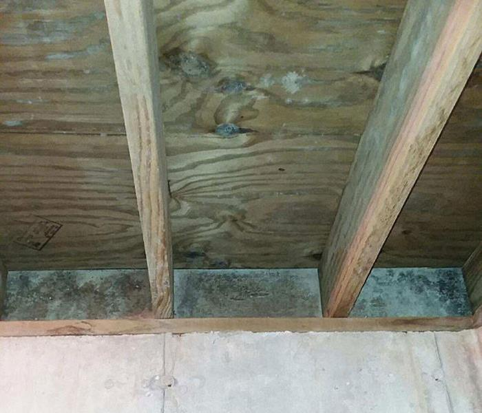 Mold Damage in Fitchburg, WI