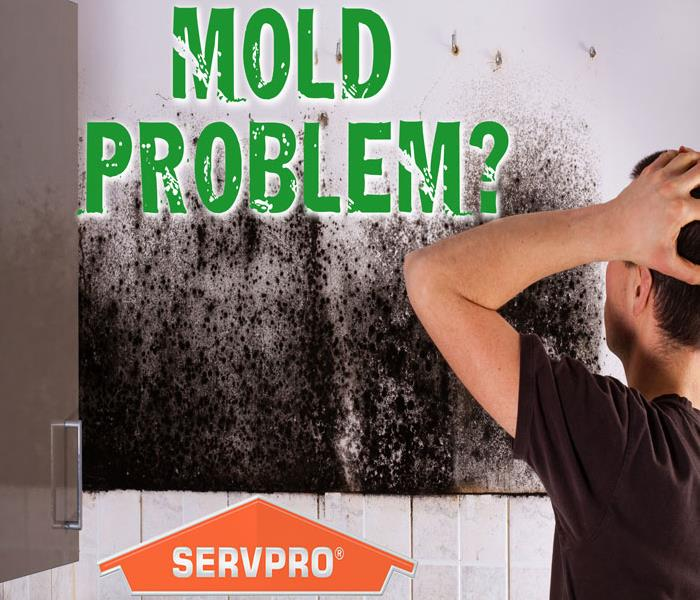 How do you manage mold?
