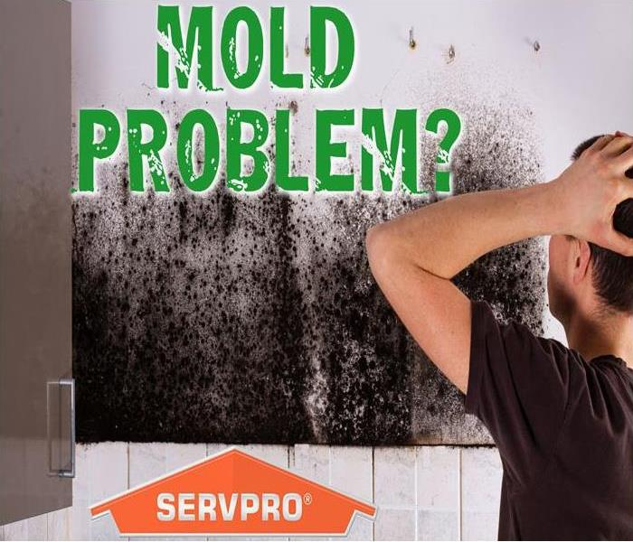 Mold Remediation Got Mold?