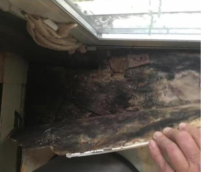 Mold Remediation Mold - What You Need To Know